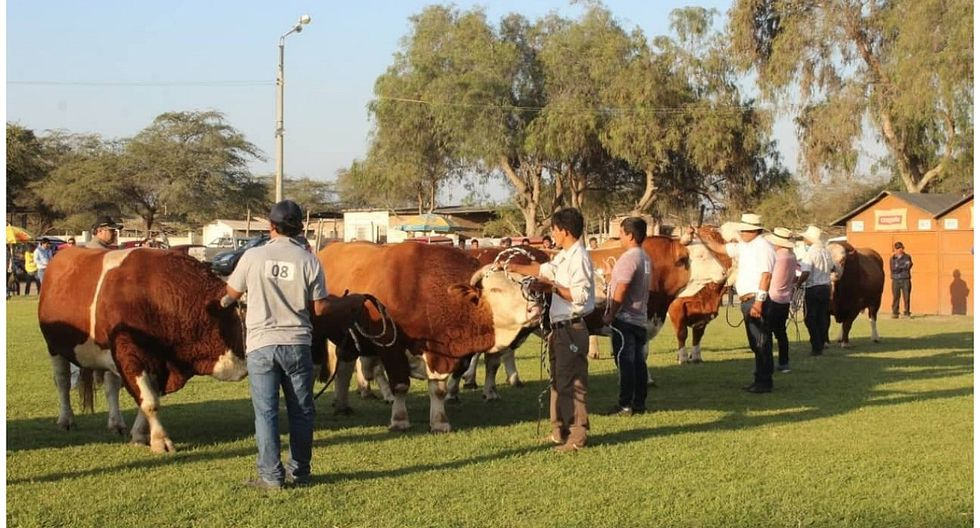 Senasa participará en XX Feria Ganadera que se desarrollará en Lambayeque
