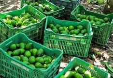Ayacucho exportó 4500 toneladas de 'Oro verde' a mercados internacionales