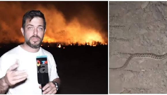 Periodista pasa el susto de su vida al ser sorprendido por víbora en transmisión en vivo (VIDEO)