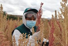 Colombia abre sus puertas a la quinua peruana