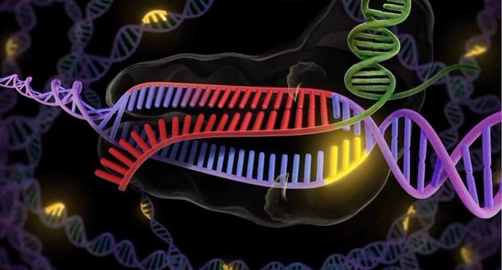Prueban tratamiento experimental con ADN editado en paciente con enfermedad mortal