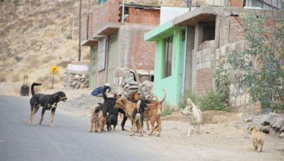Detectan el segundo caso de rabia canina en Arequipa| Foto: Archivo