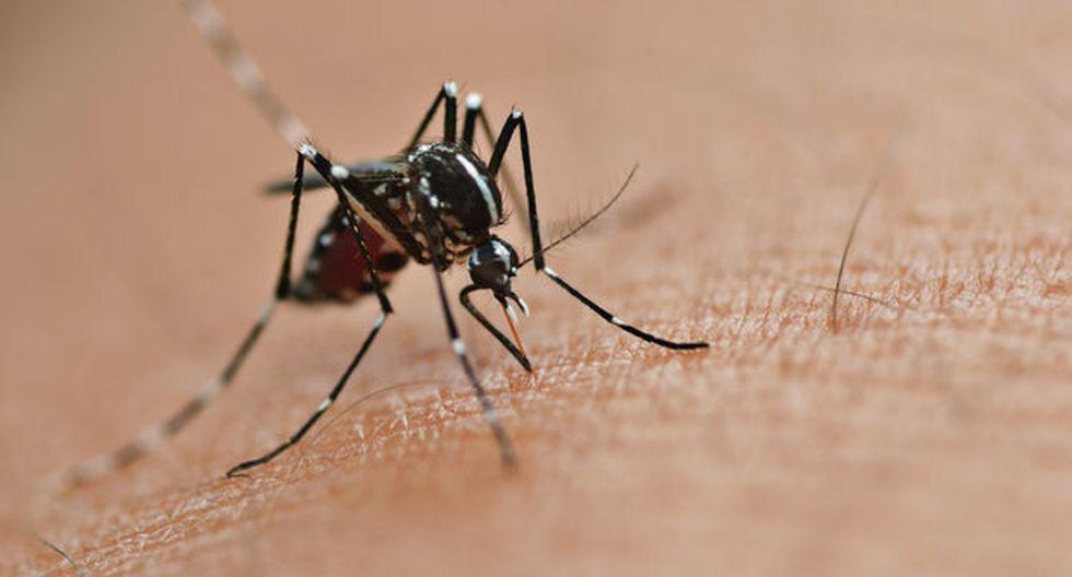 Chile dona U$ 60 mil a Honduras para combatir zika, dengue y chikunguña