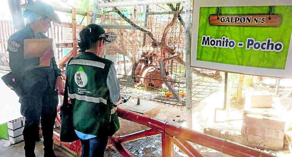 Rescatan un mono y aves que eran exhibidos en un restaurante campestre