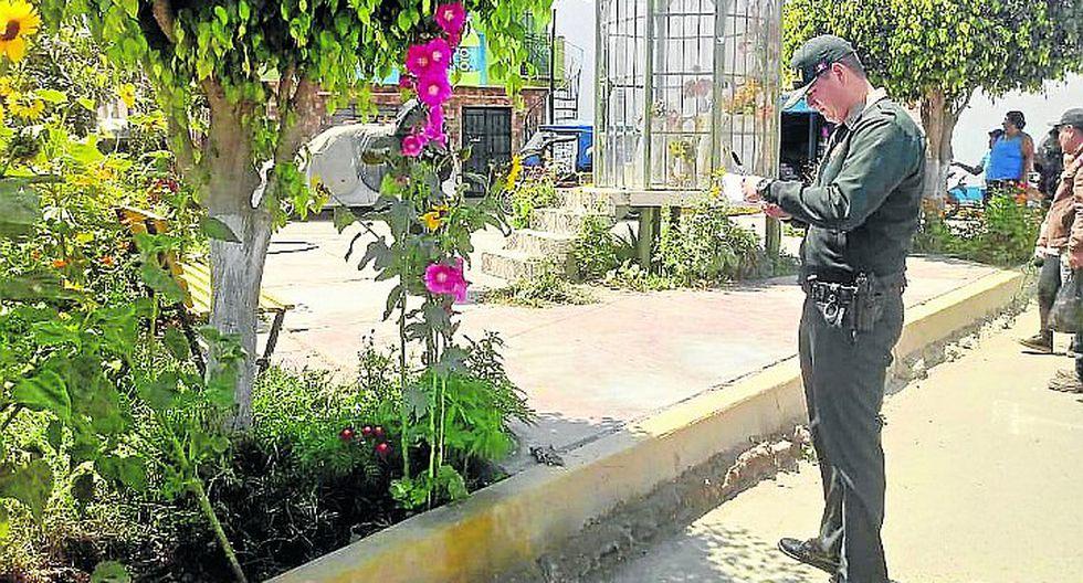 PNP halla planta de marihuana en plazuela