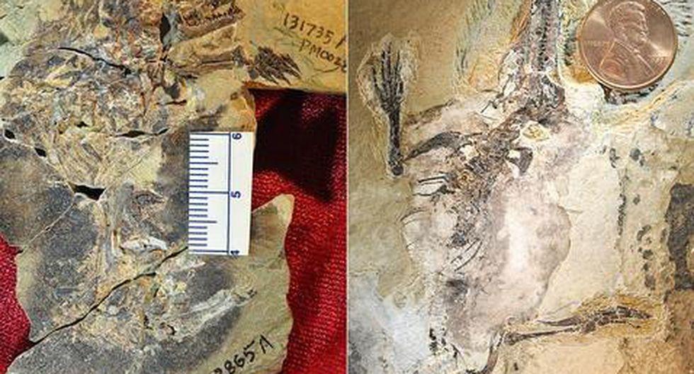 Hallan fósiles de dos mamíferos que vivieron hace 160 millones de años