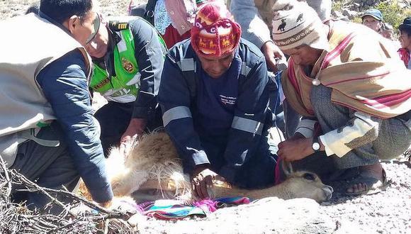 Beneficio es para las regiones donde se crían alpacas y vicuñas. (Foto: Correo)
