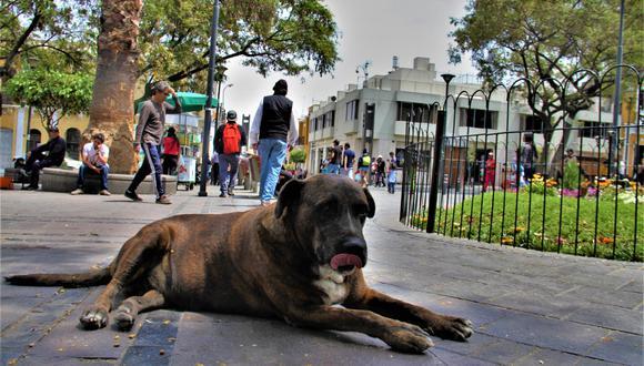 Entrañable perro dejó de existir a consecuencia de su peso y edad. La ciudad está de luto . (Foto: Correo)