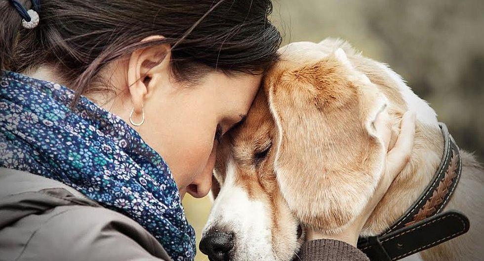 Empresa peruana dará un día de licencia a sus trabajadores por fallecimiento de mascotas