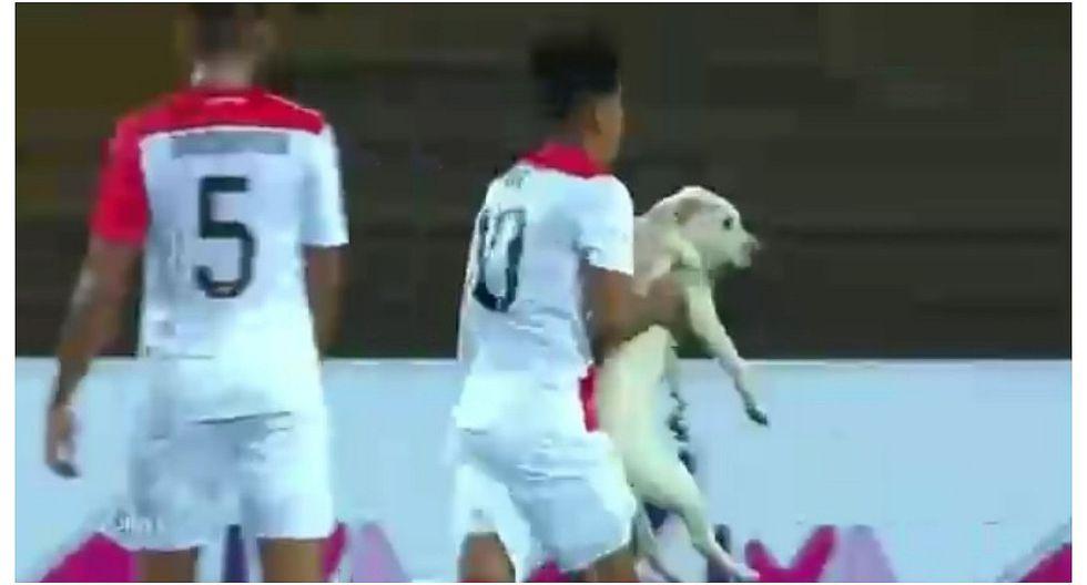 Perú vs Chile: perro irrumpió en la cancha y jugador nacional tuvo que sacarlo (VIDEO)