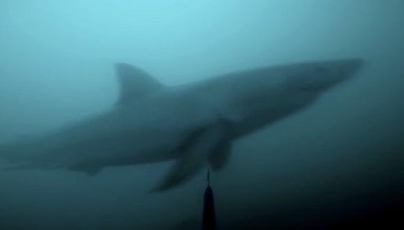 YouTube: el escalofriante momento en que un buzo se cruza con un tiburón blanco (VIDEO)