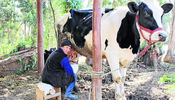 Huancayo: ofertan leche fresca a S/ 2.00 por litro y con verdaderos nutrientes