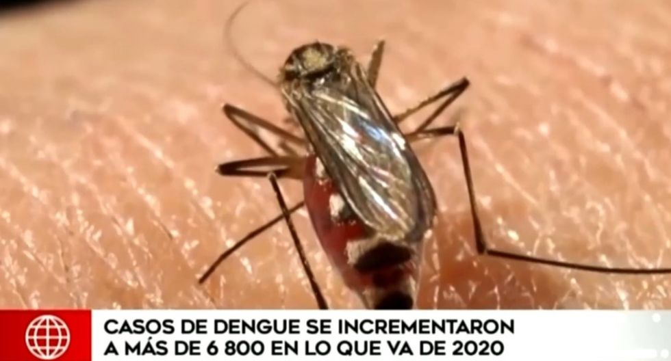 Foto: América Noticias