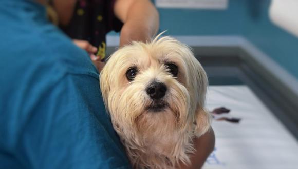 Se han habilitado estaciones en distintas veterinarias de la ciudad, en donde se podrá implantar el chip bajo el cuello del perro (Foto:  JC / Pixabay)
