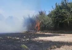Incendio afecta cultivos en Camaná por quema de granza de arroz