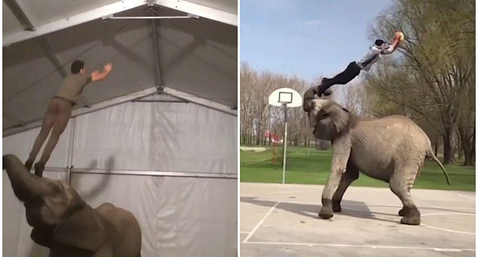 Acróbatas hacen extremas maniobras con ayuda de elefantes