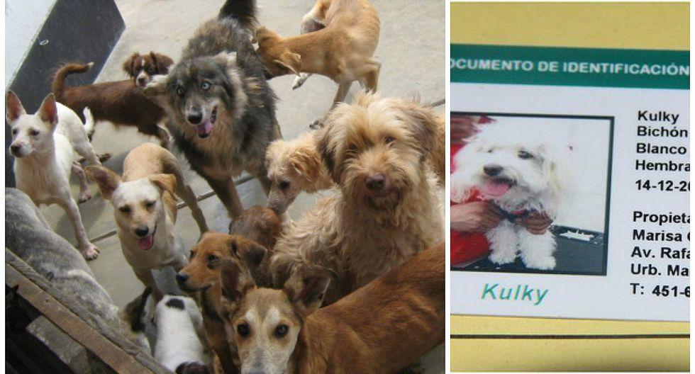 ¡Atención! perros y gatos de esta provincia peruana tendrán documento de identidad (DIM)