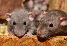 ¿Cuáles son los principales animales que transmiten virus a los humanos? (FOTOS)
