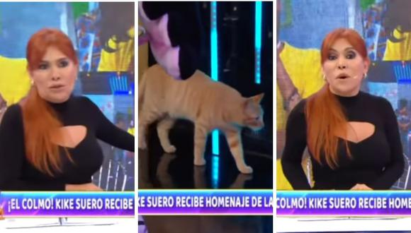 Magaly Medina sacó cara por el animalito que paseaba por el canal ATV. (Foto: Captura YouTube)