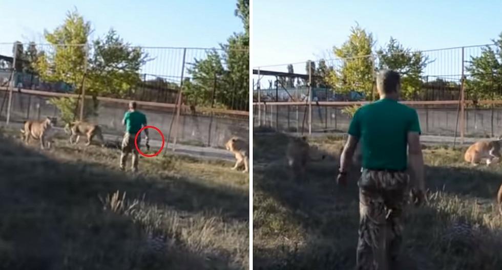 Hombre sorprende al espantar a 7 leones solo con una sandalia (VIDEO)