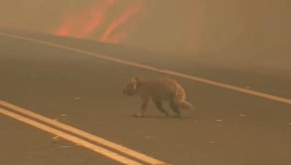 Animales viven una situación dramática ante la tragedia del medio ambiente.