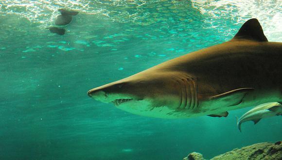 YouTube: le avisan que está nadando junto a 15 tiburones y el surfista hace esto
