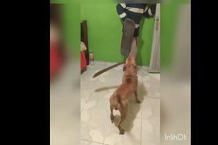 Viral: perro corretea con machete a joven