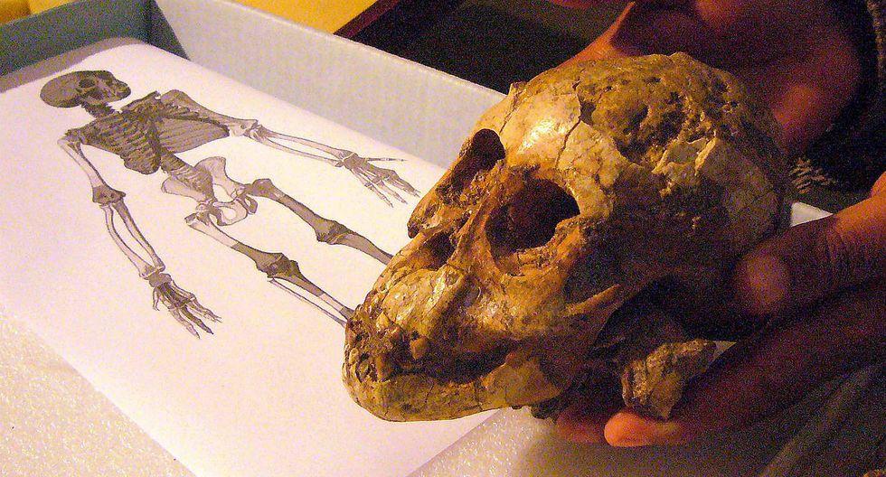 Antepasados del ser humano se cruzaron con homínido 'fantasma'