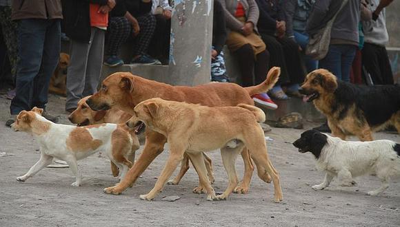 El año pasado Arequipa solo registro 20 casos de rabia canina, sin embargo este año en menos de dos meses se reportaron 18 casos de esta enfermedad. Hasta el momento 110 canes de la zona han sido vacunados. (Foto Archivo referencial)