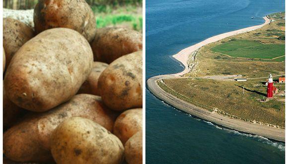 El cultivo de papas con agua salada, una apuesta contra el hambre