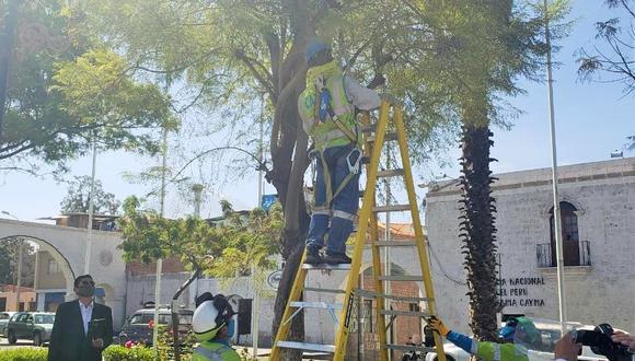 Poda de árbol en la plaza del distrito de Cayma. Foto: Omar Cruz