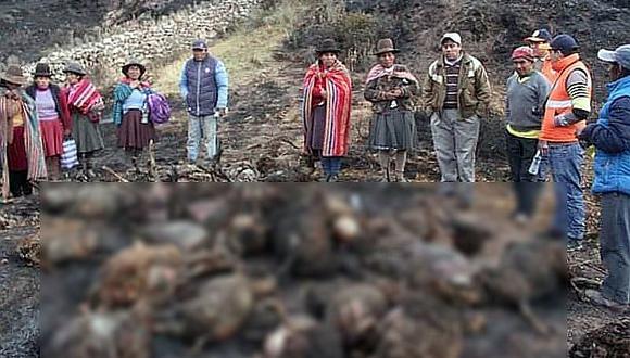 Tragedia en Cusco: 200 ovejas mueren calcinadas en incendio forestal (FOTOS)