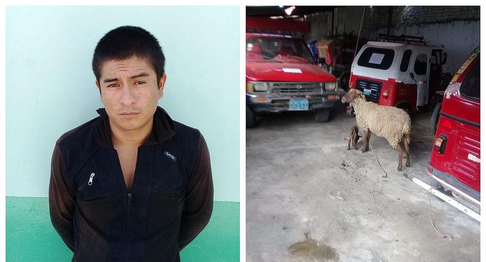 Cae tras robar ocho ovejas valorizados en S/ 1,500