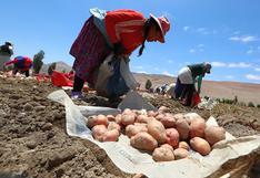 Sector agropecuario registró crecimiento de 1.2% en primer mes del 2021, según Midagri