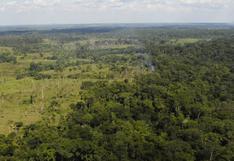 Minam: Deforestación en la Amazonía peruana se redujo en 4.1 %