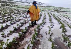 Más de 70 hectáreas de cultivo en Huancavelica resultaron afectados tras intensa granizada en Acoria