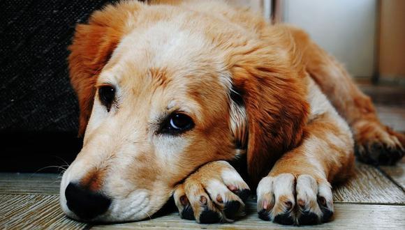 Los perros tienen comportamientos habituales que cuando lo hacen no nos hacen imaginar que nos están alertando de algo (Foto: Pixabay)