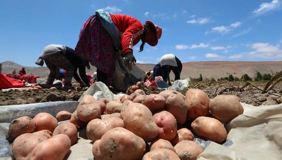 Mandatario señala que Priorizaran los proyectos de irrigación, siembra y cosecha de agua para integrarnos a los mercados internacionales. (Foto: GEC)