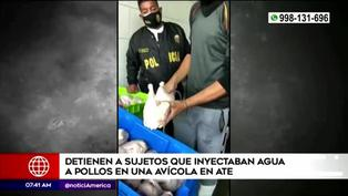 Ate Vitarte: detienen a sujetos que inyectaban agua a pollos en avícola clandestina