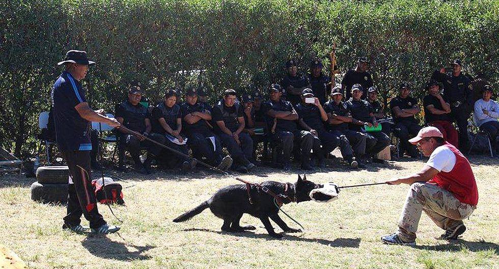Impartirán primer curso de adiestramiento canino en Ilo