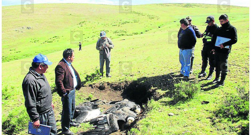 Indignante: hallan águilas y cóndores muertos en alturas de Ayacucho
