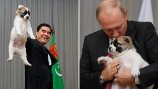 Descubre la reacción de Vladimir Putín al ver maltrato hacia cachorro