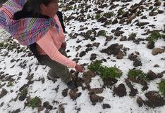 Granizada cubre más de 50 hectáreas de cultivos en Acoria