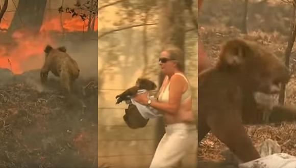 Australia: el doloroso rescate de un koala en medio de un incendio forestal (VIDEO)