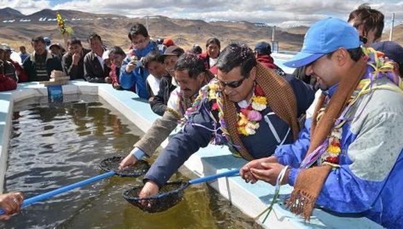 Estrenan laboratorio de truchas más alto del mundo en Puno