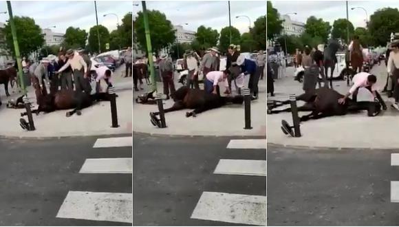 """Caballo sufrió convulsiones en plena calle por """"jornadas agotadoras"""" (VIDEO)"""