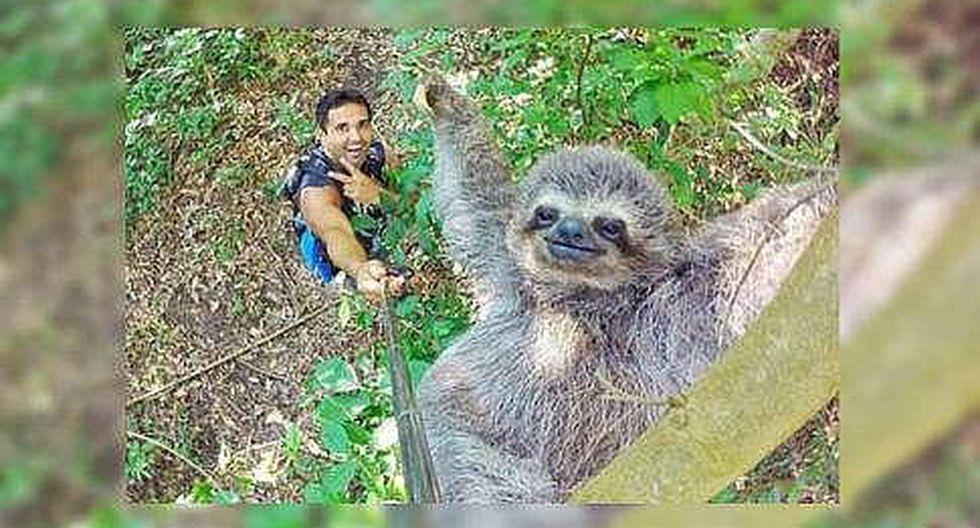 Facebook: 'selfie' de turista y oso perezoso se hace viral a nivel mundial