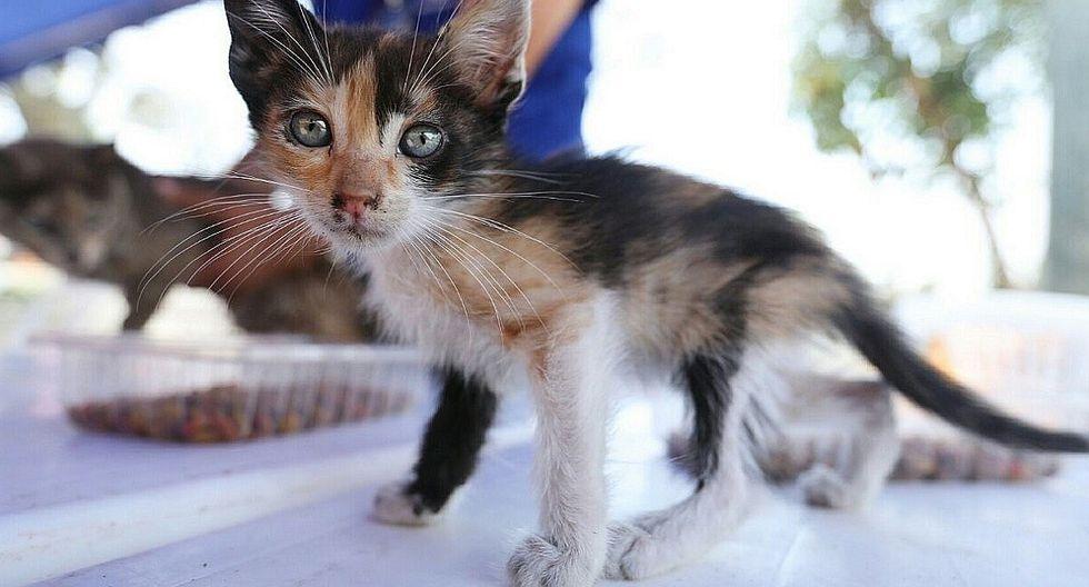 MML promueve adopción de gatitos como regalo de Navidad