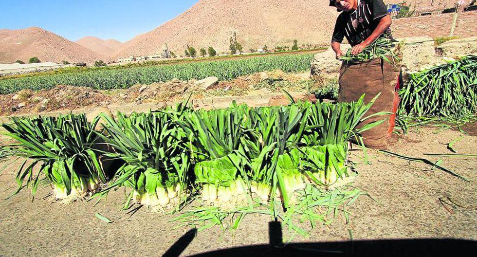 Caída del precio de la cebolla obliga a exportar a la India