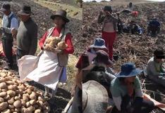 Campesinos solo reciben 10 céntimos por 100 kilos de papa y solicitan ayuda del Gobierno en Huancavelica (VIDEO)
